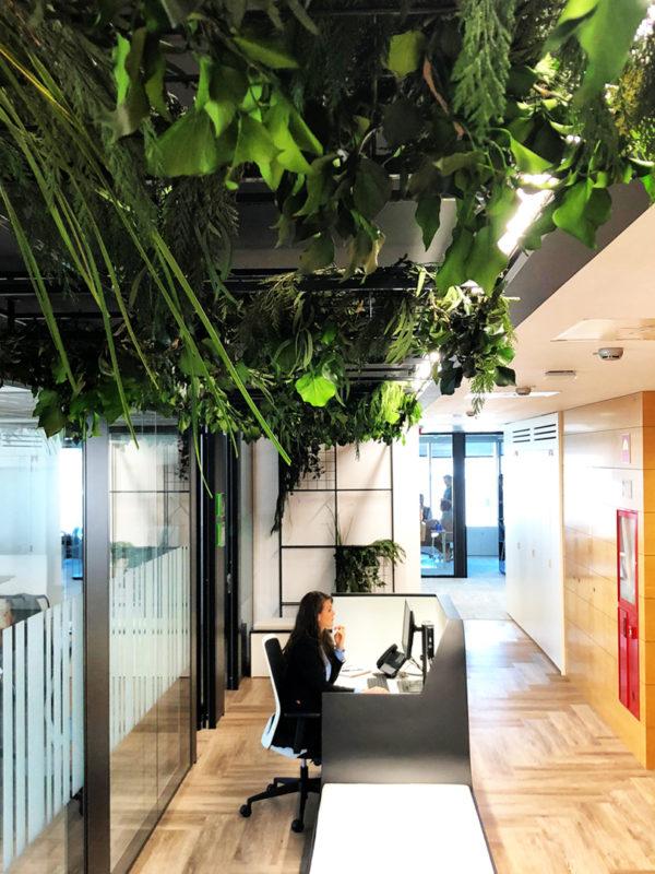 decoracion-vegetal-plantas-preservadas