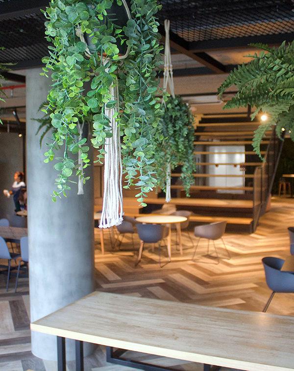 SAP decoracion-vegetal-plantas-SAP