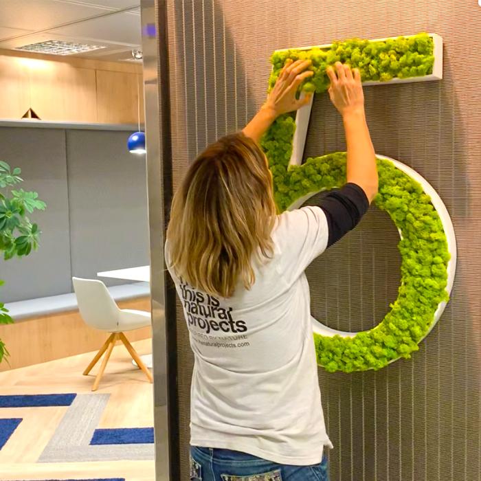 decoracion vegetal con plantas preservadas