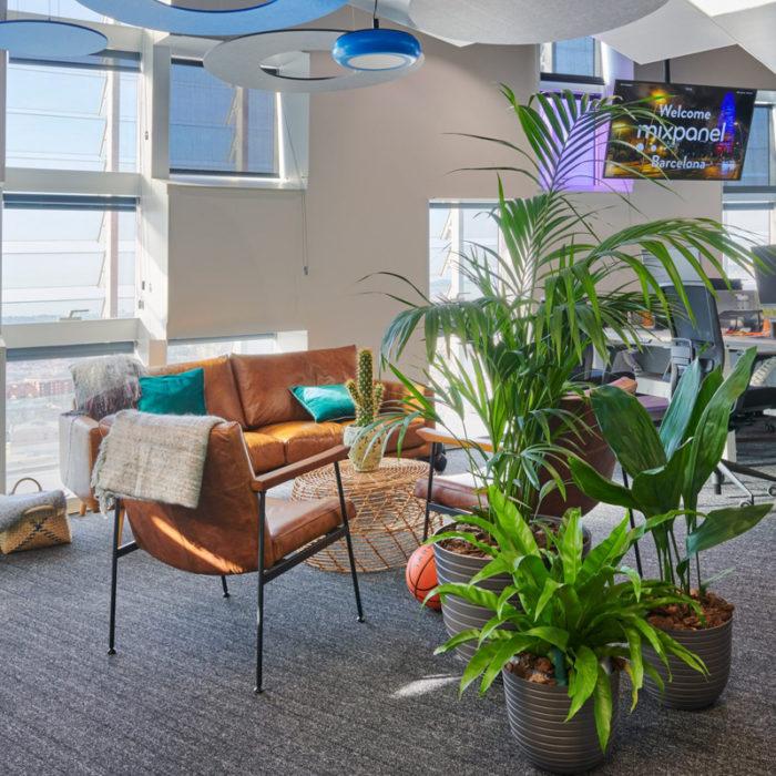 plantas naturales decoracion de oficinas